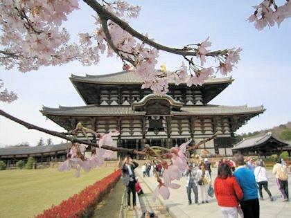 東大寺大仏殿と桜