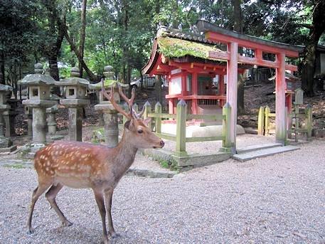 春日大社祓戸社と鹿