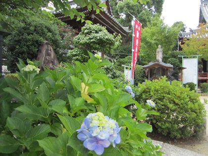 久米仙人像と紫陽花