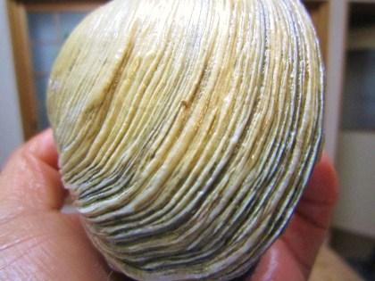 オク貝の模様