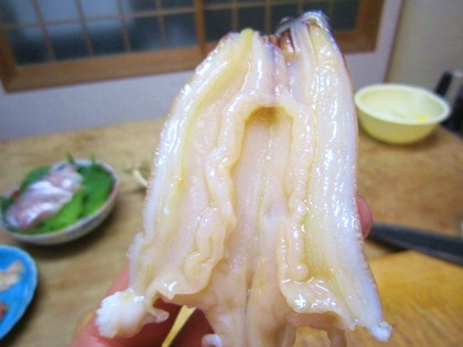 ナミ貝の水管