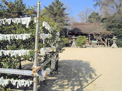 広瀬神社のおみくじと橘