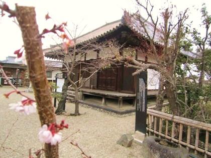 寒桜と大日堂