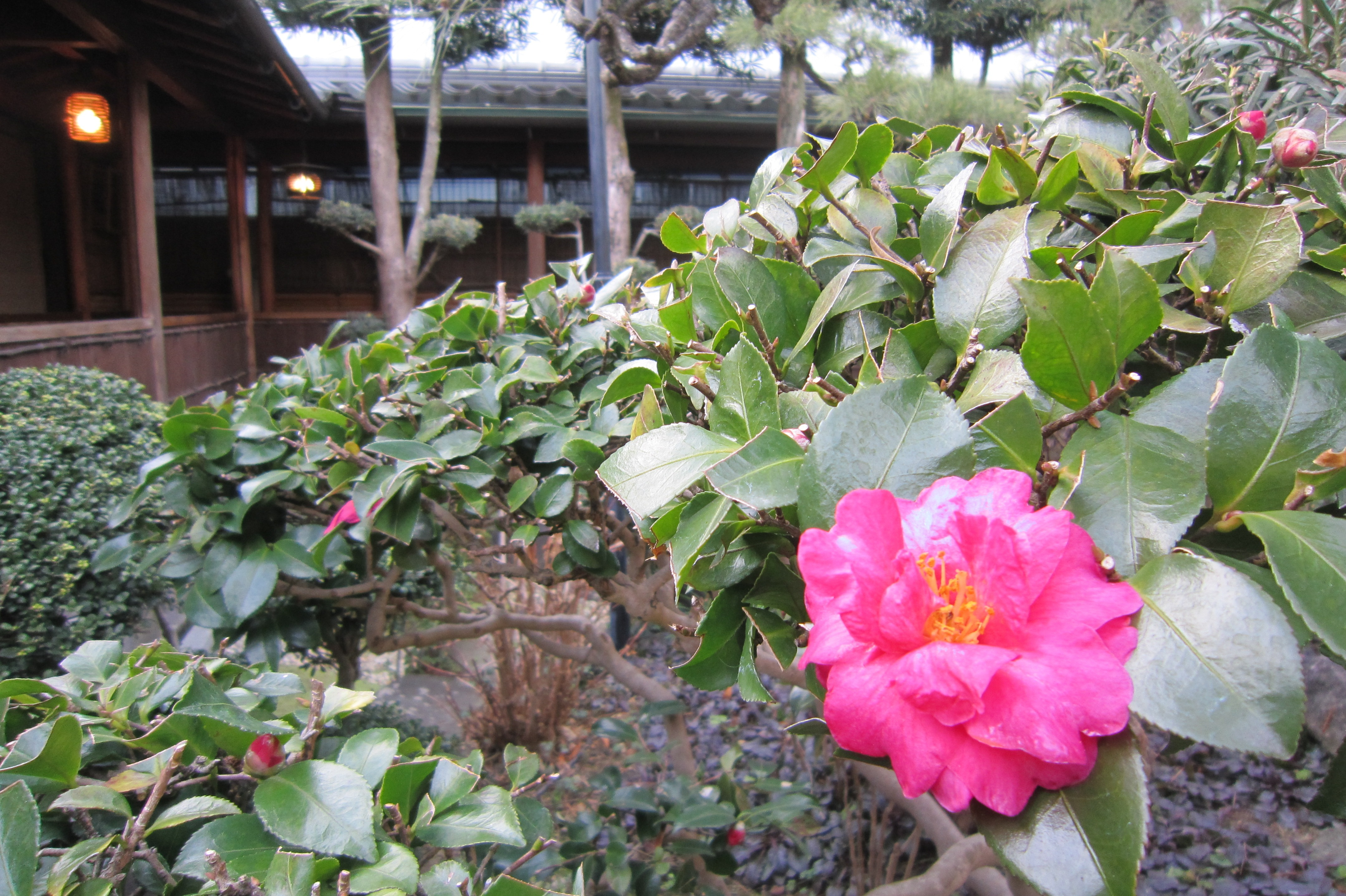 中庭に開花する花
