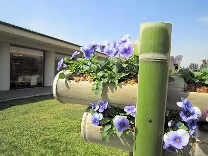 万葉文化館の竹の花壇