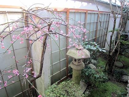 客室御笠箱庭の梅