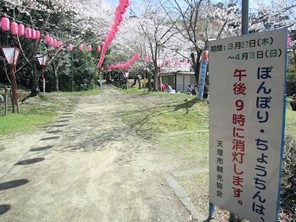 石上神宮の桜まつり