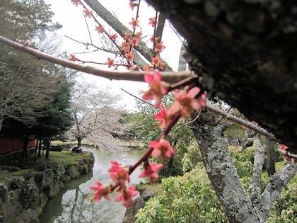 東大寺の三社託宣池と花