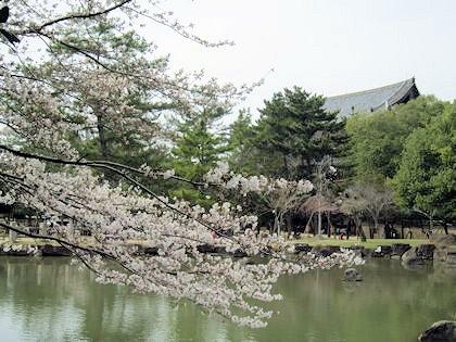 東大寺大仏殿と池