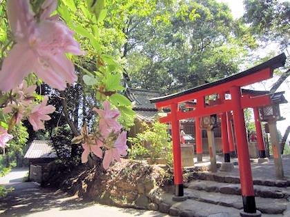 成願稲荷神社とツツジ