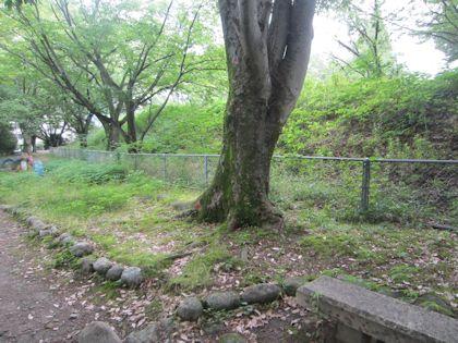 木と御土居