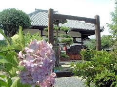 飛鳥寺本堂と紫陽花