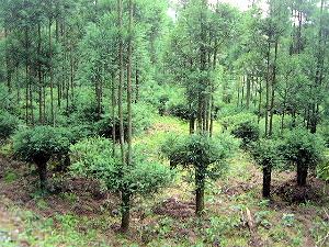 森林吸収源対策