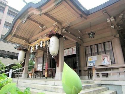 坐摩神社の蓮