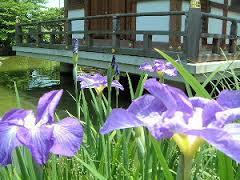 法華寺に開花する花