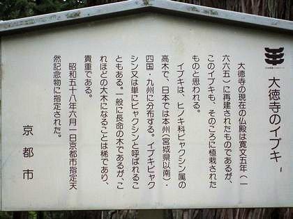 大徳寺のイブキの案内板