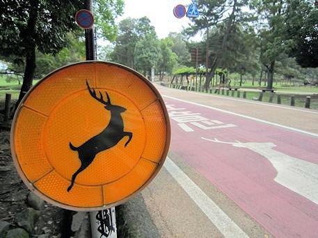奈良公園の鹿飛び出し注意