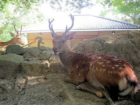 荒池園地のトイレと鹿