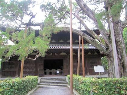 大徳寺仏殿とイブキ
