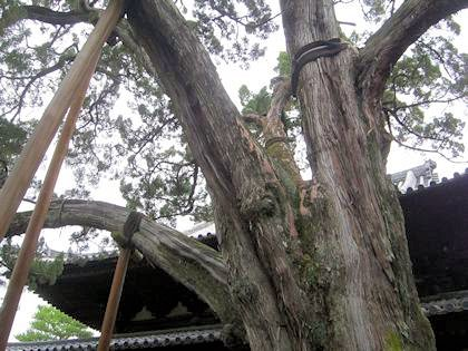 大徳寺のいぶき