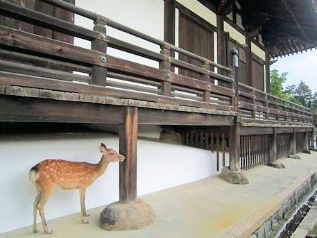 東大寺三月堂