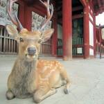東大寺中門の鹿