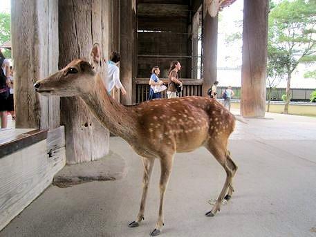 東大寺南大門の鹿