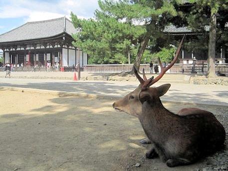 奈良公園の鹿と興福寺東金堂