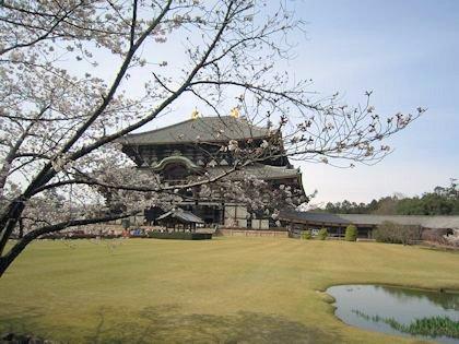 東大寺大仏殿と花