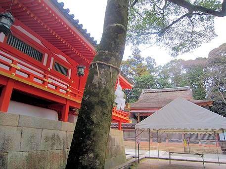 招霊の木と石清水八幡宮若宮社