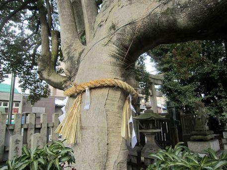 満足稲荷神社の御神木