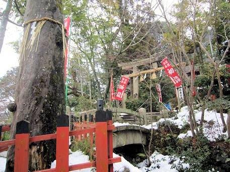 熊野若王子神社の梛の木