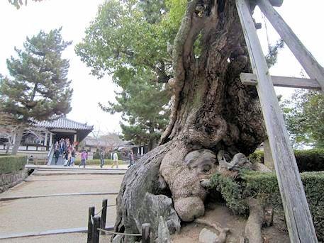 法隆寺西院伽藍前の巨木