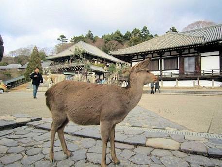 奈良公園の鹿と東大寺二月堂・三月堂