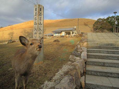 若草山入山ゲートの鹿