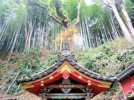 石清水井の上の竹林