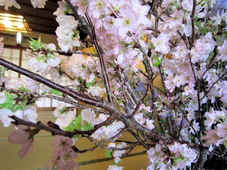 牡丹桜の枝振り