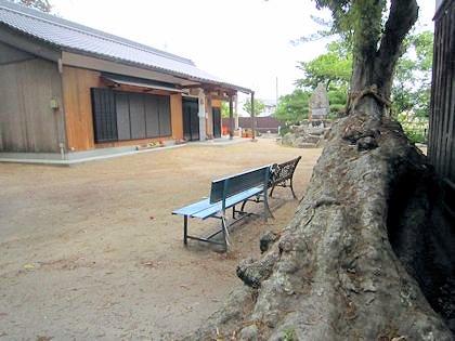 角刺神社のイチイガシ