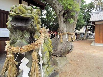 角刺神社御神木と狛犬