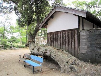 角刺神社の御神木とベンチ