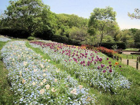 馬見丘陵公園の花の道