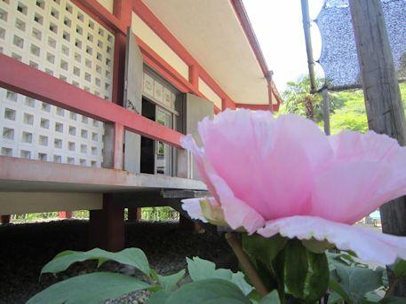 長谷寺宗宝蔵の牡丹