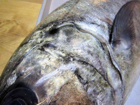 ギンガメアジの黒斑