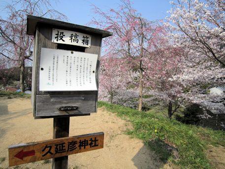 俳句投稿箱と桜