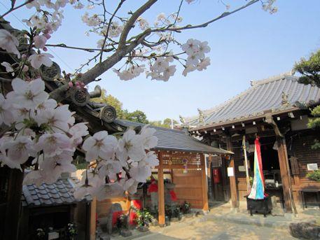 馬場本村地蔵堂の桜