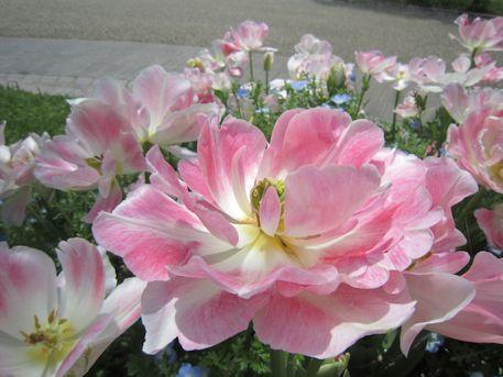 馬見丘陵公園の花