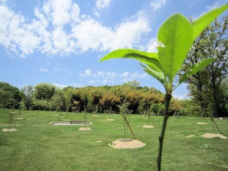 木の葉と乙女山古墳