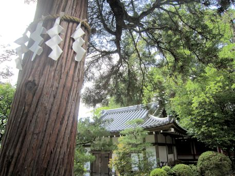 石上神宮神杉と神饌所