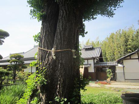 鏡作神社の御神木