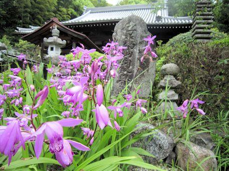 子嶋寺の花